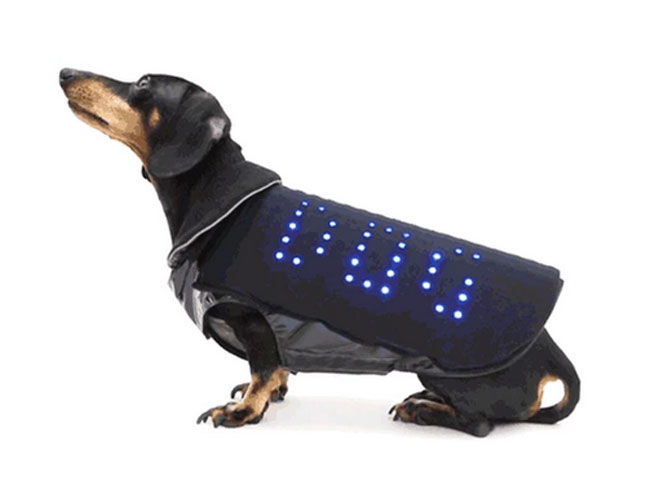 LED Dog Vest Must Get Funded So Rex Can Have One
